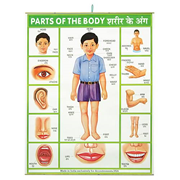 Parts of the Body Hanging Banner